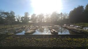 markwells-wood