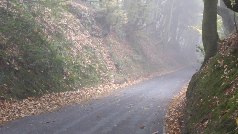Coldharbour Lane, the route to Bury Hill Wood, the site where Europa wants to drill this year. Photo: DrillOrDrop