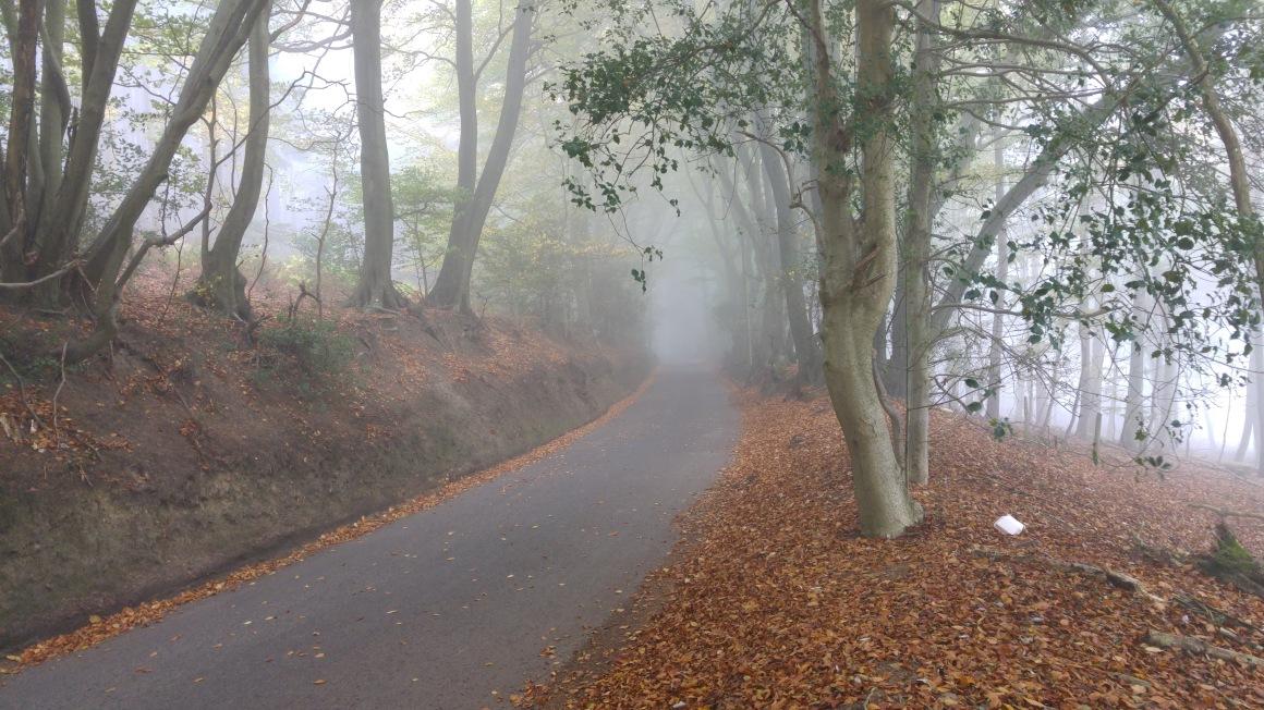 bury-hill-wood