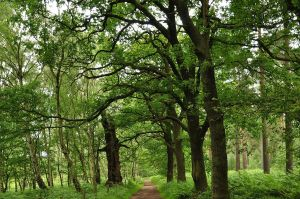 sherwood_forest_9541