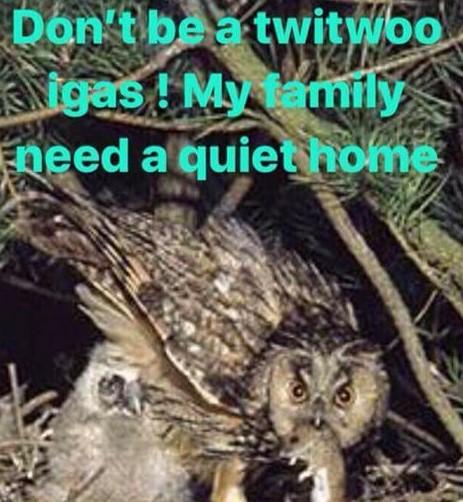 180201 Misson owl