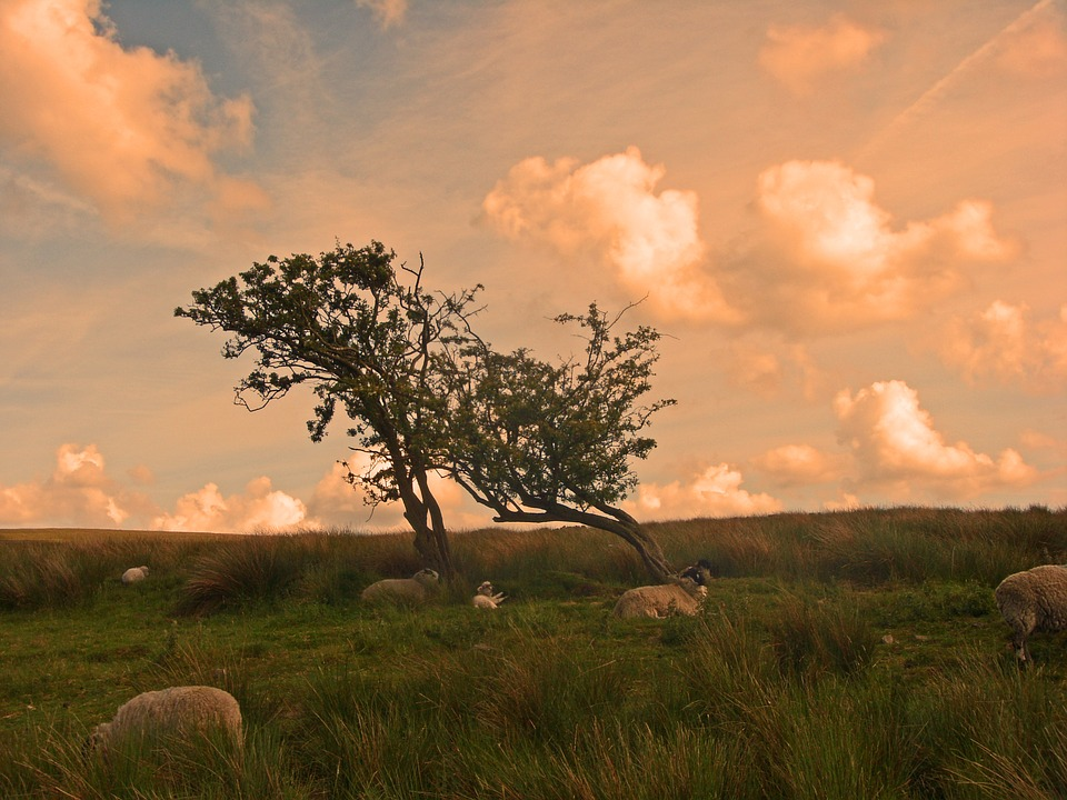 Sky Yorkshire Moors Grass Tree Field Sheep