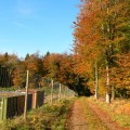 Markwells Wood 7 Ann Stewart