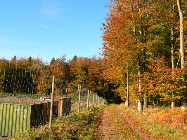 Markwells Wood before abandonment. Photo: Ann Stewart