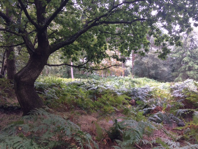 180911 Leith Hill fencing removed UWOC5