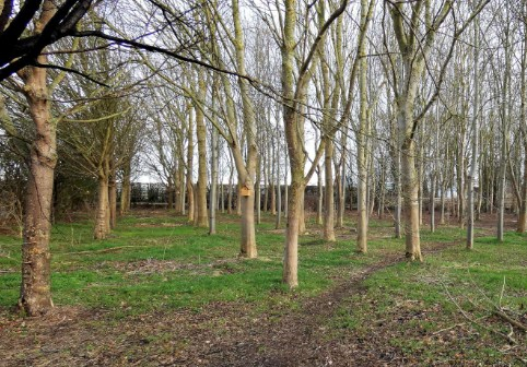 190118tinker copse eric walson