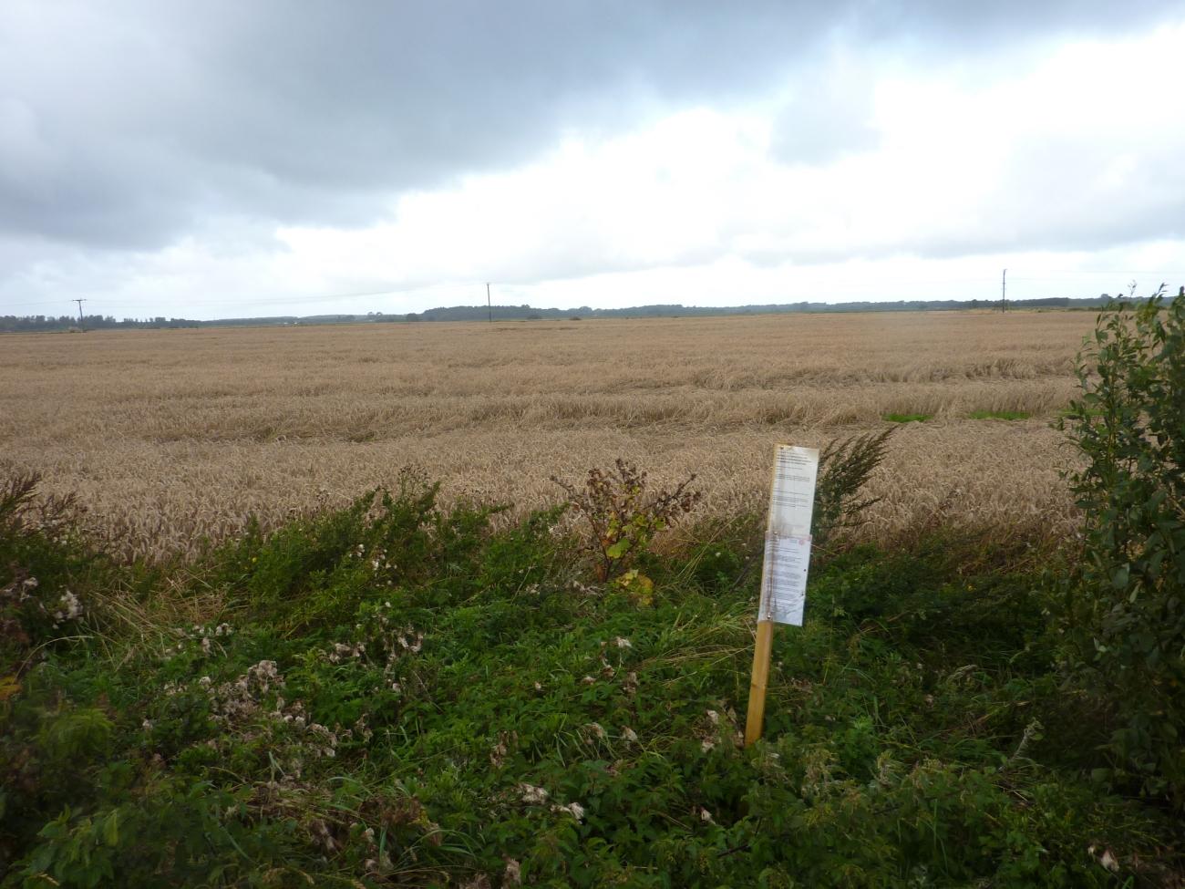 190906 Altcar Moss site